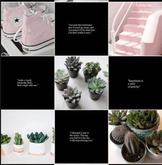 Plan de contenidos para Instagram